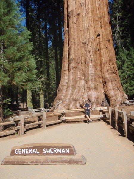 Sequoia park největší strom planety