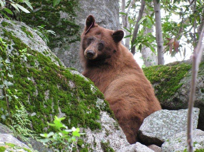 Sequoia park - úžasný úlovek pro fotografy